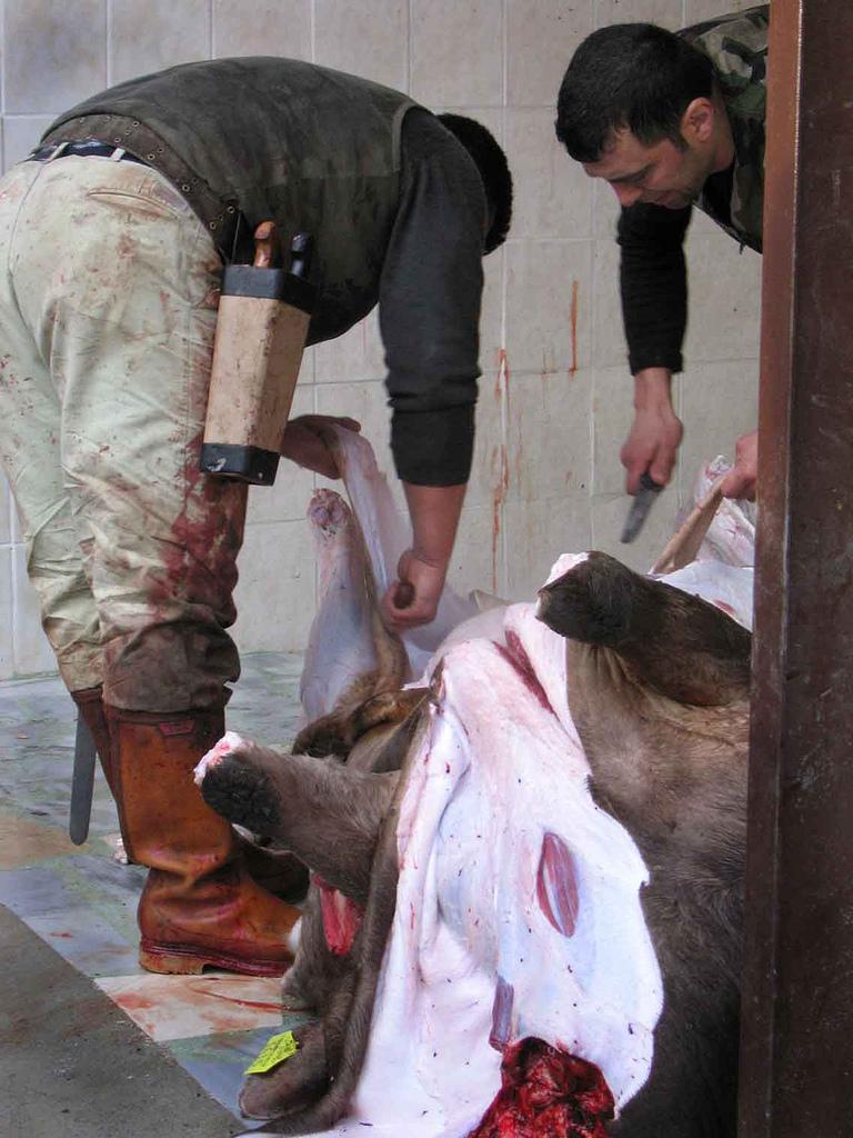 Images:Animal Sacrifices - WikiIslam