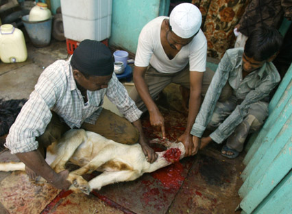 File:Animalsacrifice-0020.jpg