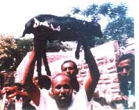 Animals Marked by Allah - WikiIslam