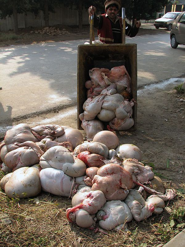 Images:Animal Sacrifices