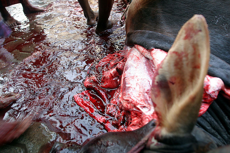 File:Images-animalsacrifice-0008.jpg